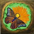 Butterfly on the daisy