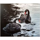 BLACK SWANS. 80 X 95 cm. Oil on canvas.