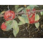 Apples Ripening on the Bough