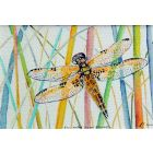 Dragonfly ,four -spotted chaser