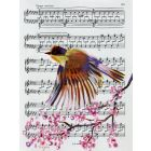 Music and Bird