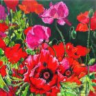 Profusion of Poppies