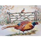Pheasants by field gate
