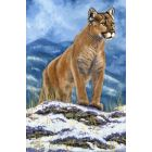 Mountain Lion (Framed)