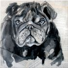 PORTRAIT OF BULLDOG II