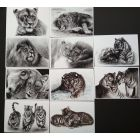 Unique Lion and Tiger Art Greeting Cards set of 10