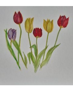 Jewel Tulips