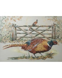Pheasants by the field gate