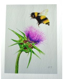 Bumblebee and Thistle