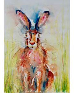 Bedraggled Hare