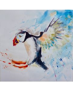 Puffin 'Coming into Land'