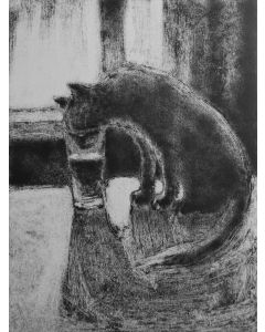 A Cat Drinking Water