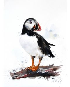 A Puffin, Original watercolour painting.