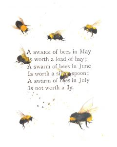 A swarm of Bees in May