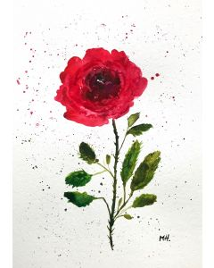 Red rose watercolour