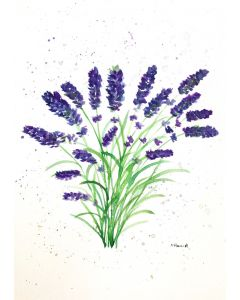 Beauty of lavender