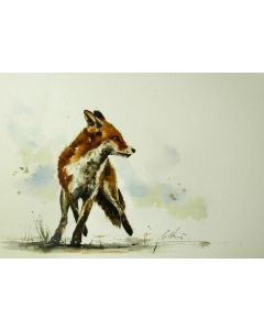 Alert Fox. Original watercolour painting.
