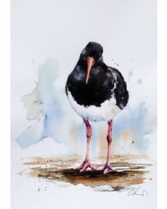 An Oystercatcher, original watercolour painting.