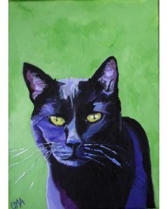Black cat, Norbert