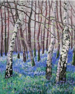 Bluebells and Birch Trees