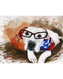 PET PORTRAIT III. American bulldog...