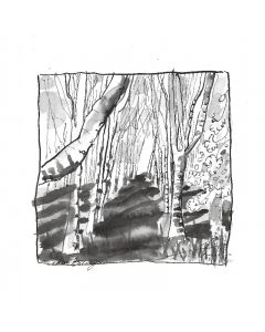 Copse of Birch Trees 1. Cotswolds, Gloucestershire