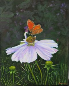 Cosmos and Gatekeeper Butterfly