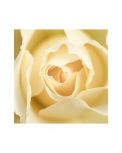 Set of three large different rose photographs