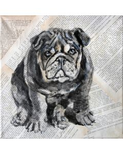 PORTRAIT OF BULLDOG... Animals