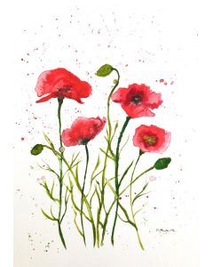 Beautiful delicate poppies flowers