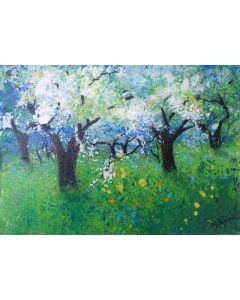 Plum Blossom in Orchard