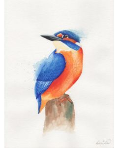 KINGFISHER WATERCOLOUR