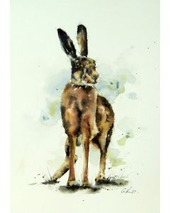 Hare. Original Watercolour Painting.