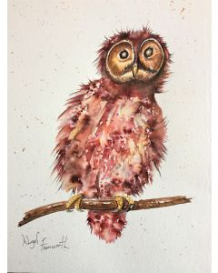 A Small Owl