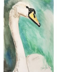 Elegant Beauty. Watercolour Swan painting on paper. 29.7cm x 42cm. Free Worldwide Shipping.