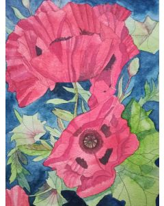 Red poppies watercolour painting
