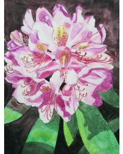 Single pink rhododendron flower watercolour painting.