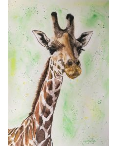Peaceful. Watercolour Giraffe on paper. 42cm x 59.4cm. Free Worldwide Shipping.