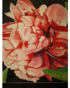 Red Peony rose painting with a black background