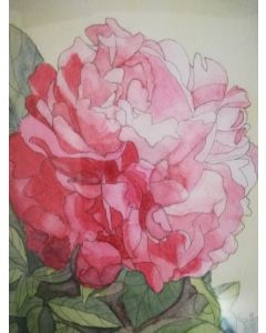 Red Peony rose watercolour painting