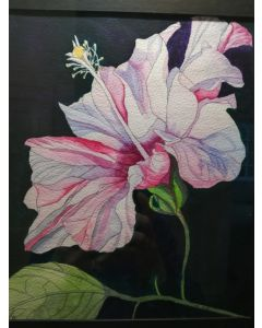Single pale pink hibiscus flower watercolour