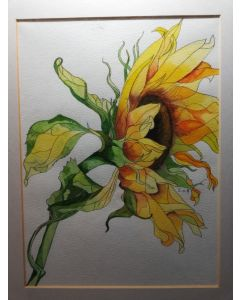 Solitary sunflower watercolour painting