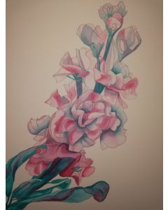Watercolour painting of a single pink stock flower against a white background.