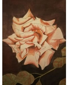 Pale pink rose with burgundy background