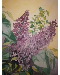 Original watercolour painting of lilac flowers with a yellow background.