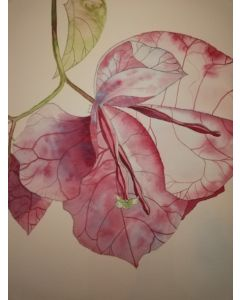 Single pink bougainvillea blossom watercolour painting.