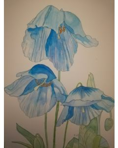 Blue poppies watercolour painting