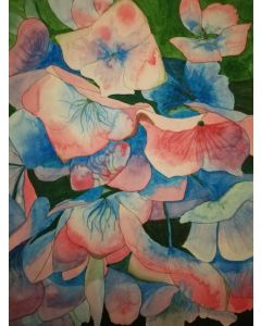 Pink and blue hydrangea watercolour painting
