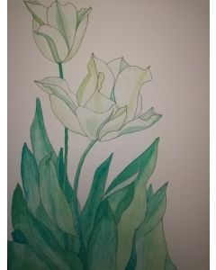 Pale yellow tulips watercolour painting