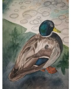 Original watercolour painting of a Duck by the water